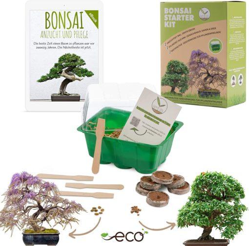 Kit bonsaî